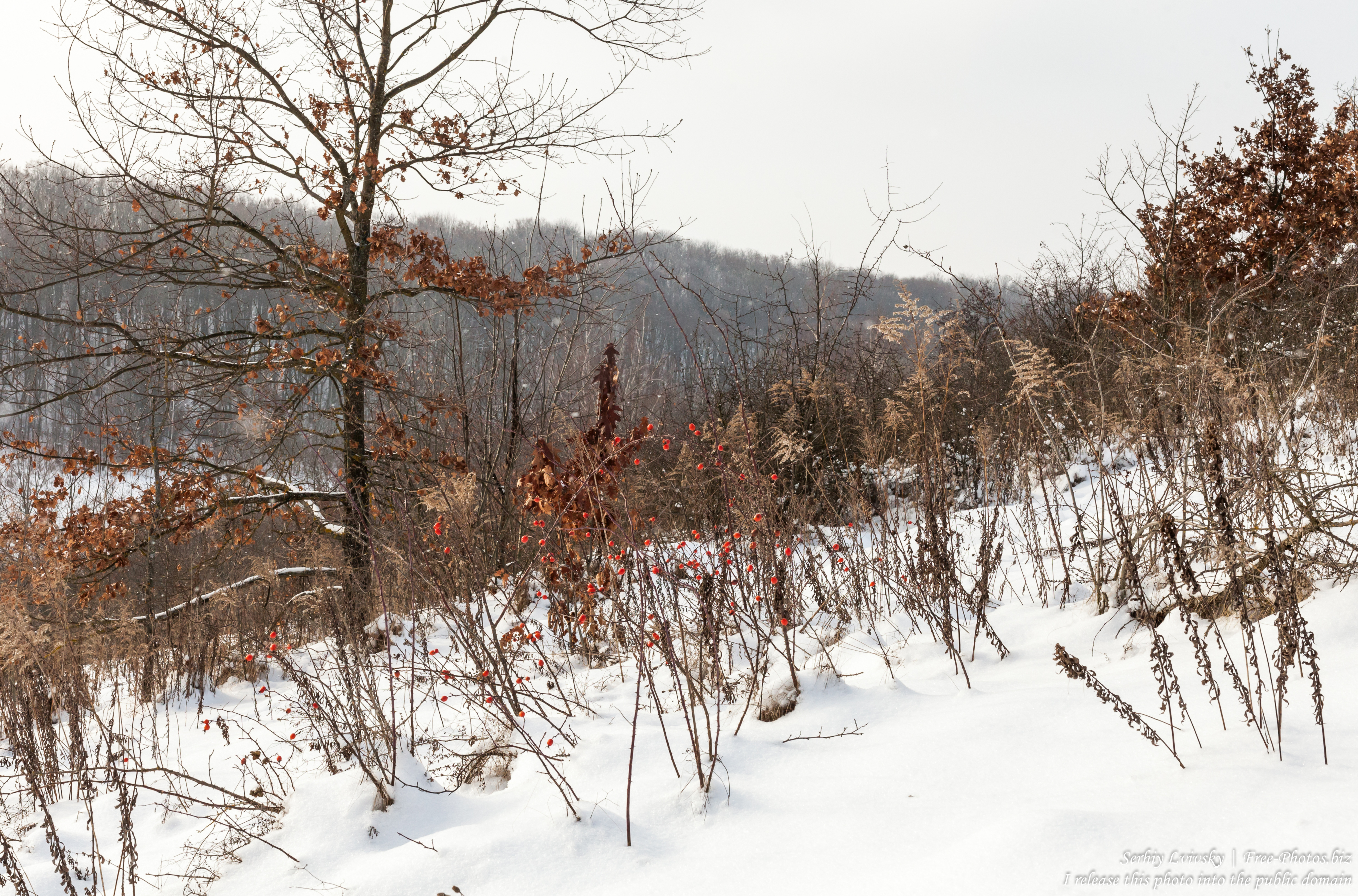 nature_in_rivne_region_of_ukraine_photographed_by_serhiy_lvivsky_in_january_2019_02