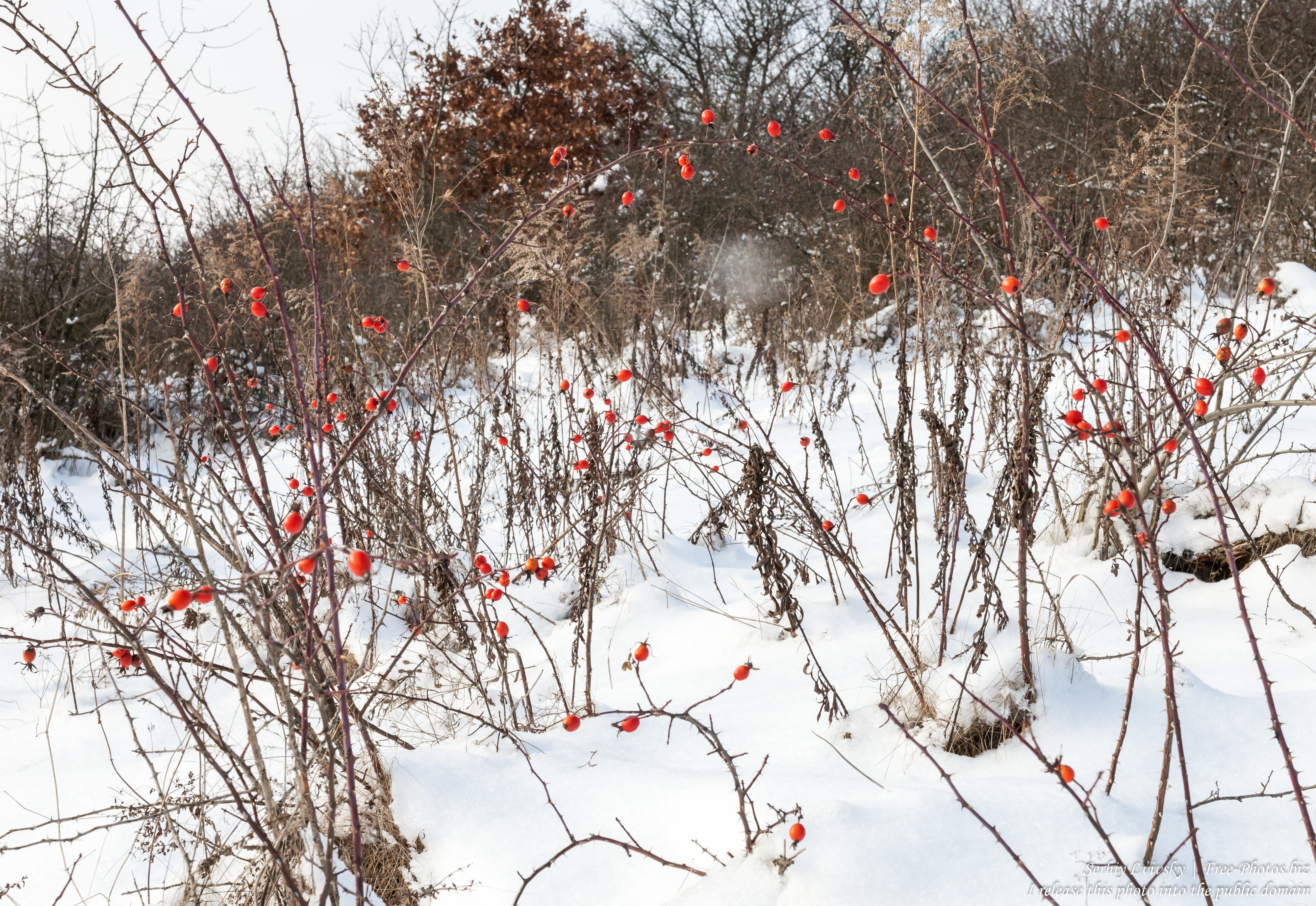 nature_in_rivne_region_of_ukraine_photographed_by_serhiy_lvivsky_in_january_2019_03