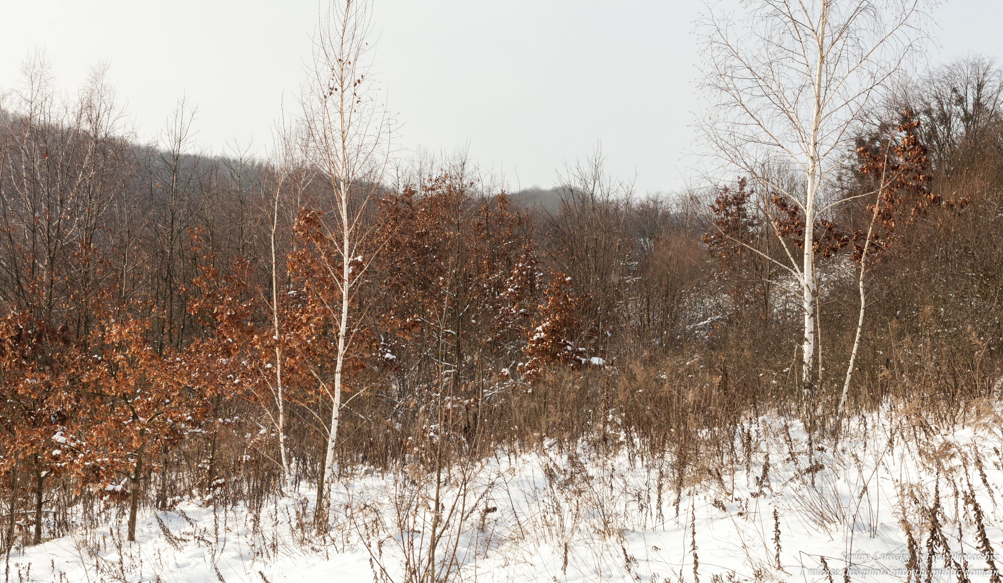 nature_in_rivne_region_of_ukraine_photographed_by_serhiy_lvivsky_in_january_2019_05
