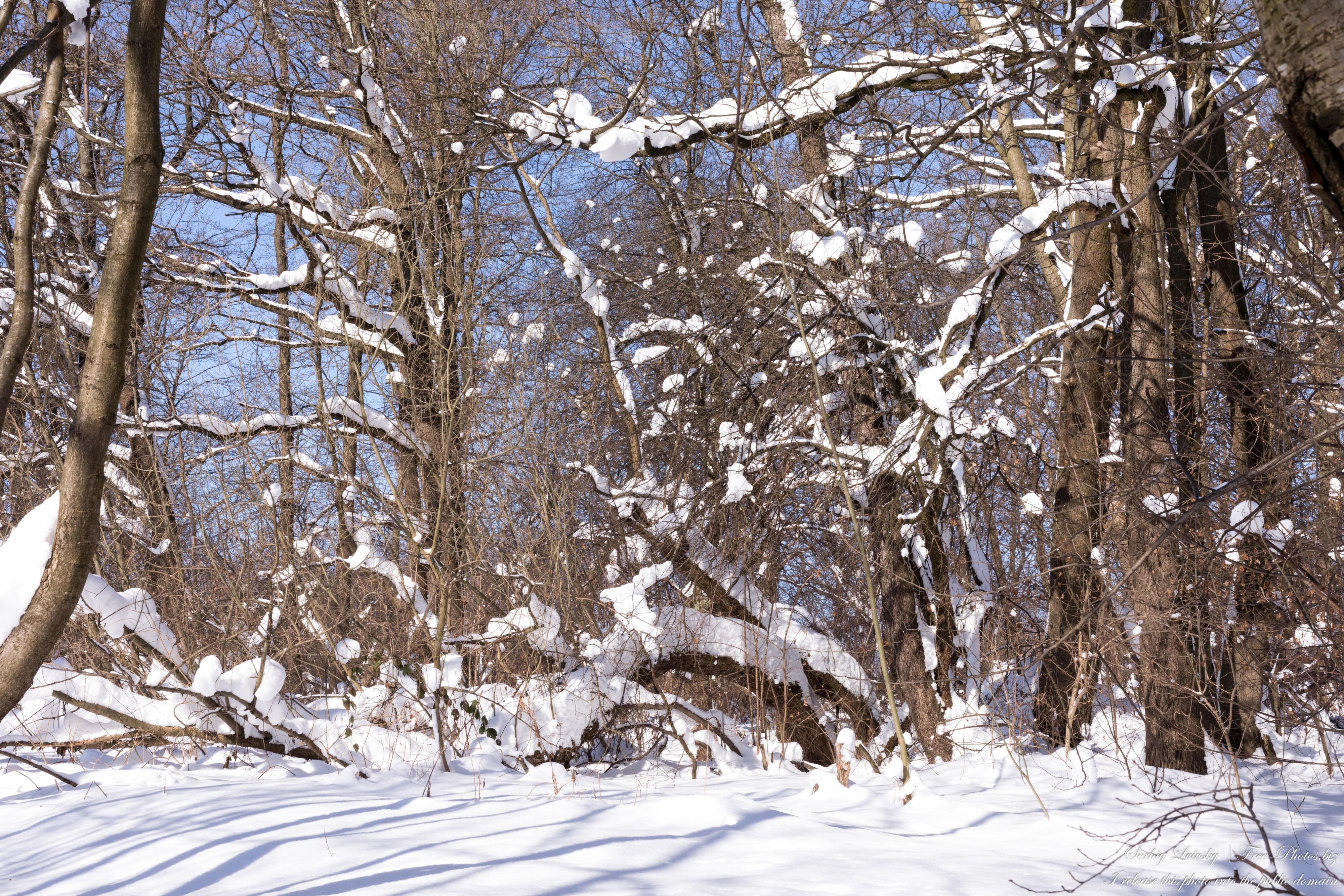 a_sunny_winter_day_in_lviv_region_of_ukraine_in_feb_2021_by_serhiy_lvivsky_10