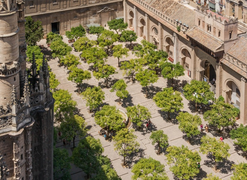 Orange trees courtyard cathedral from Giralda Seville Spain