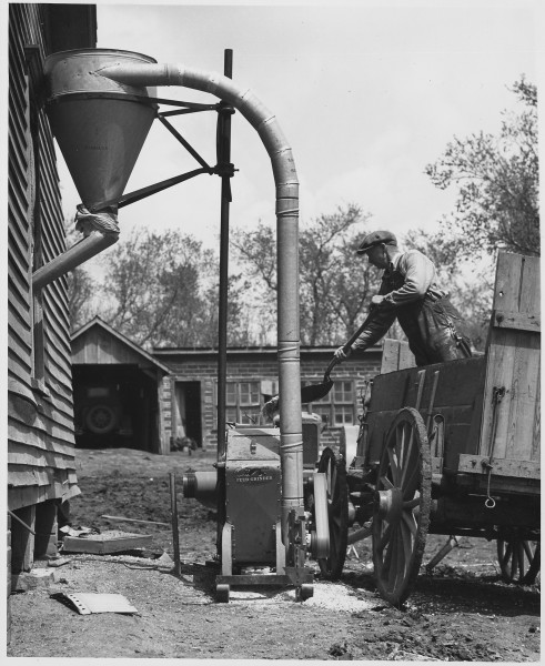 Shelby County, Iowa.... Grinding feed at home. The grinder, a new and very efficient machine, is run . . . - NARA - 522447