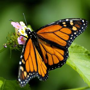 Free Photos of Butterflies