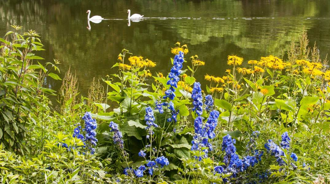 swans on a pond and flowers in a park in Copenhagen, Denmark, June 2014, picture 42
