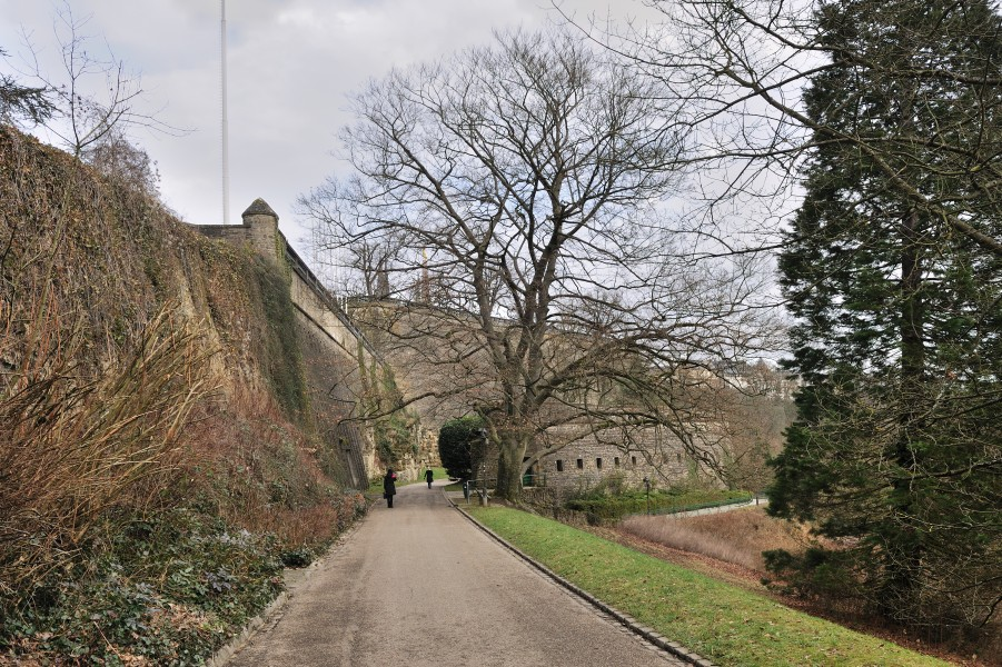 Luxembourg Petrusse fortress and remarkable beech 01