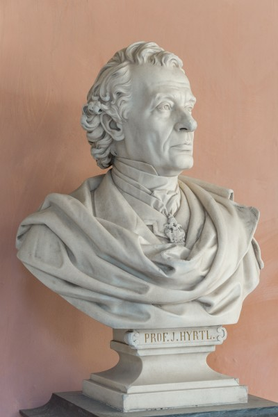 Josef Hyrtl (1810-1894), Nr. 113, bust (marble) in the Arkadenhof of the University of Vienna-2979