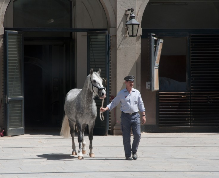 Spanish Riding School stable