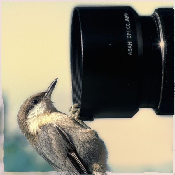 Nuthatch Lens