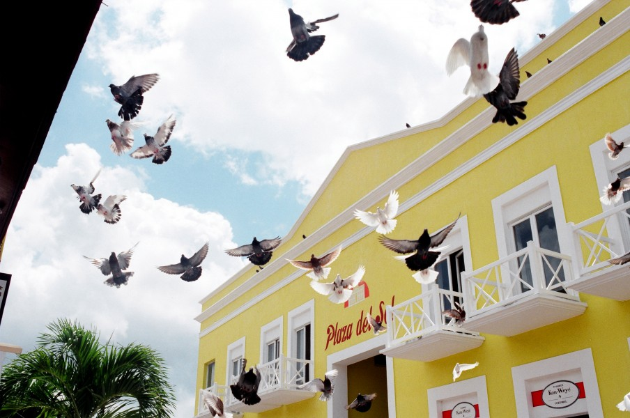 Pigeons in Cozumel, Mexico (5657947070)