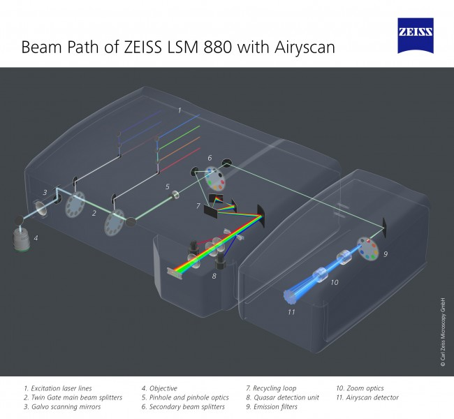 ZEISS LSM 880 with Airyscan (14657209838)