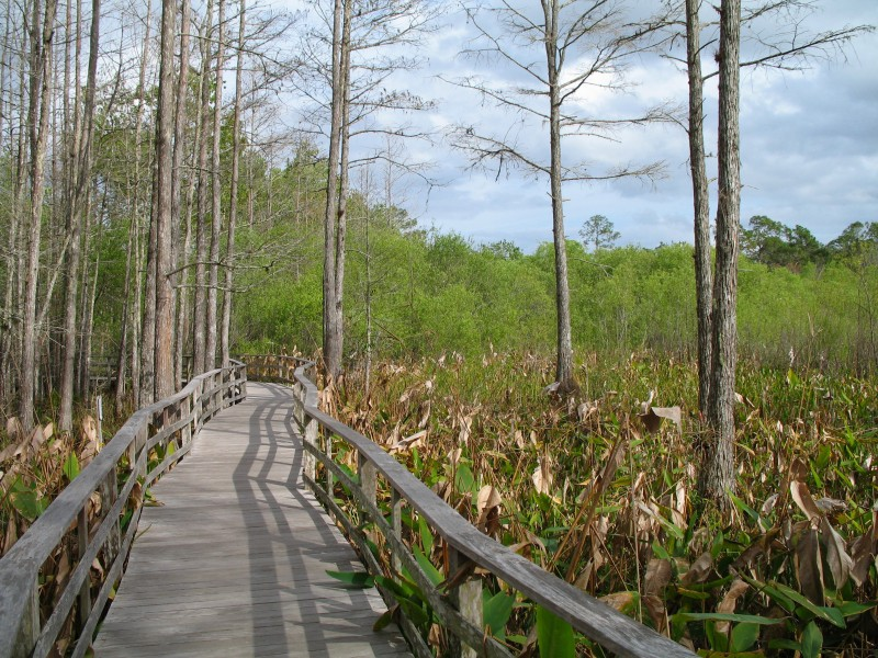 Audubon Society Corkscrew Swamp Sanctuary