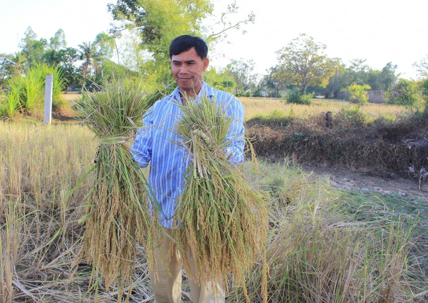 Harvesting the Rice...Siem Reap (6042864518)
