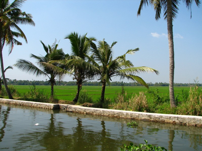 India - Kerala - 007 - paddy fields line the backwaters (2068840278)