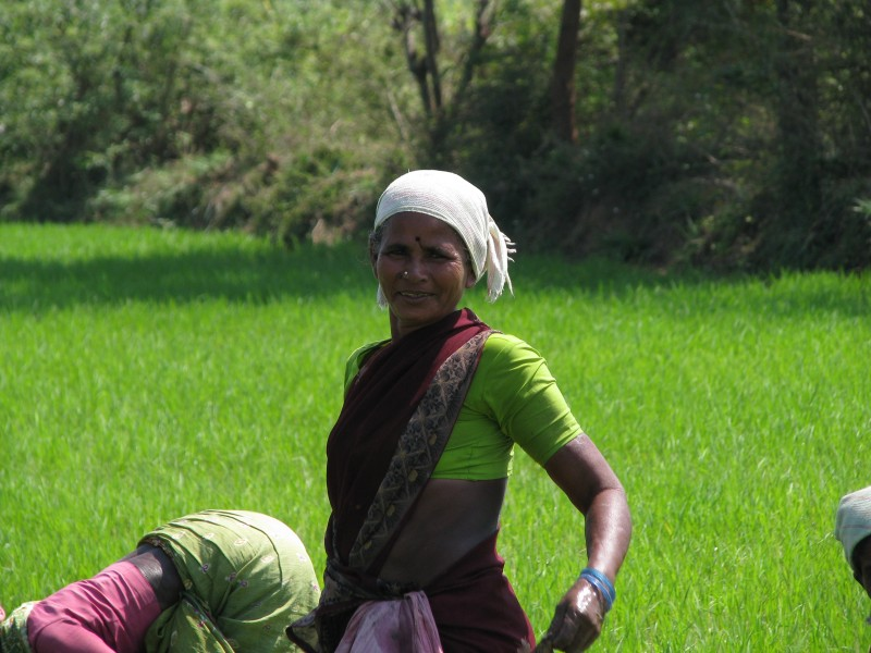 India - Sights & Culture - Planting Rice Paddy 6 (3245011208)