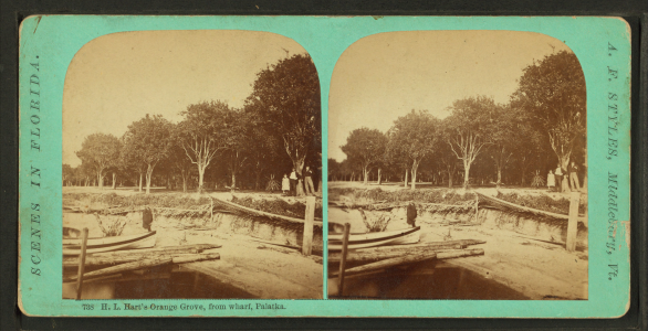 B.L. Hart's orange grove, from wharf, Palatka, from Robert N. Dennis collection of stereoscopic views