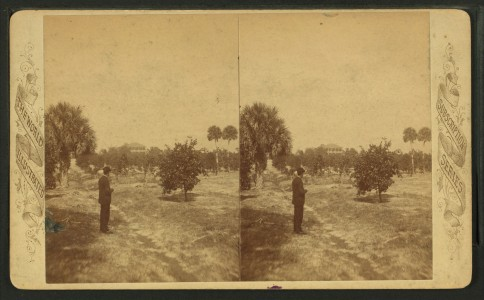 Dr. Bary's residence and orange grove, Enterprise, Florida, from Robert N. Dennis collection of stereoscopic views