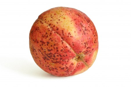 Guava fruit on a white background