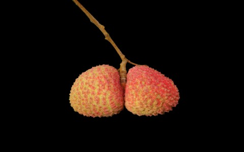 Twin lychees (Litchi chinensis)-source