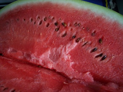 Watermelon Citrullus lanatus