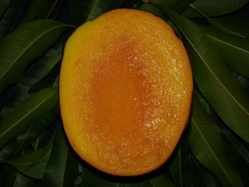 This is a photo of a sliced, ripe Tommy Atkins mango from a tree in the Ghosh Grove, Rockledge, Florida.