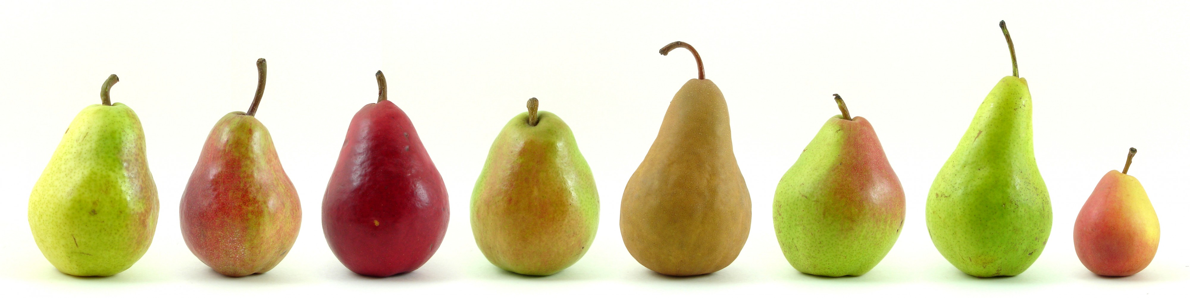 Eight varieties of pears from U.S. markets