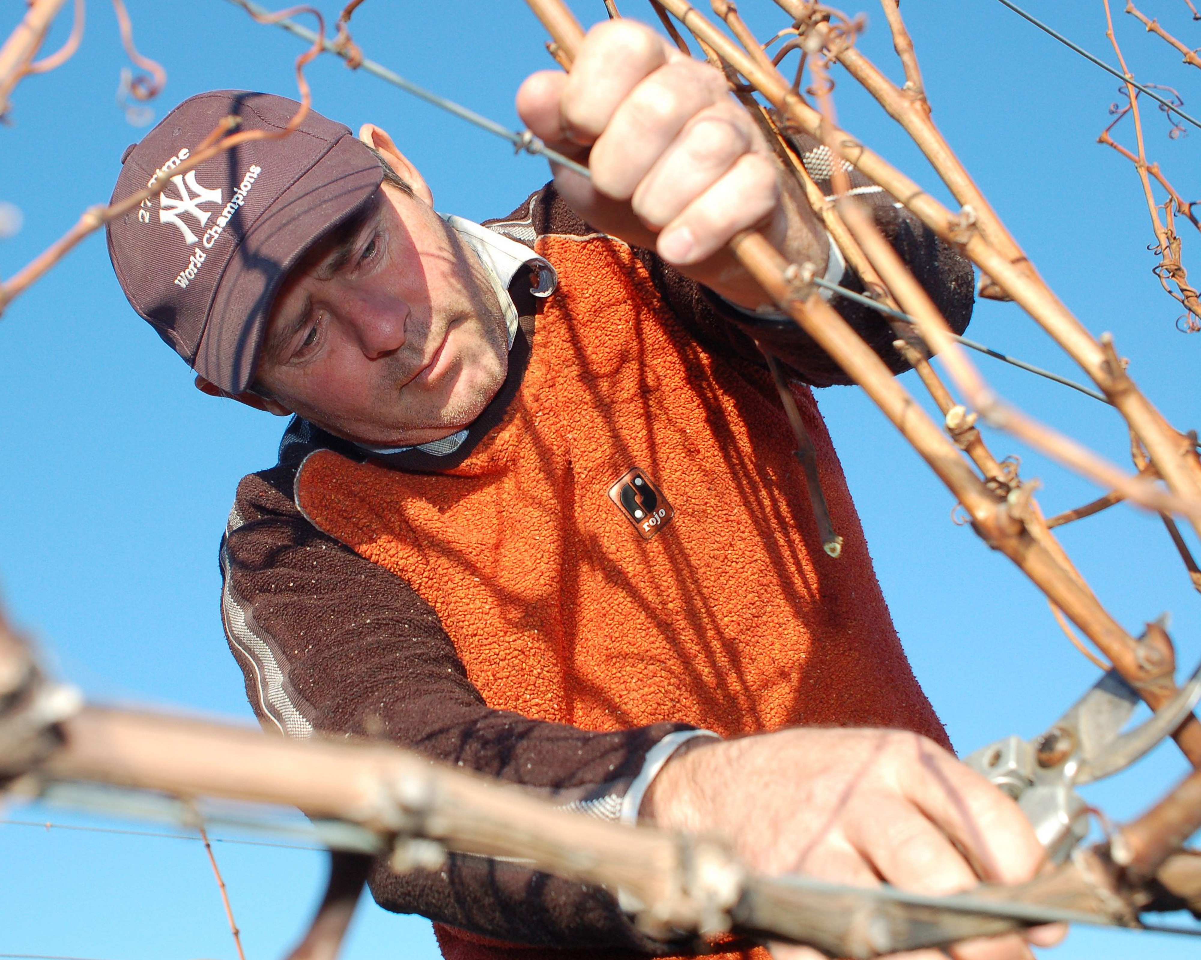 Steve Lubiana pruning at Granton Vineyard Tasmania 2010