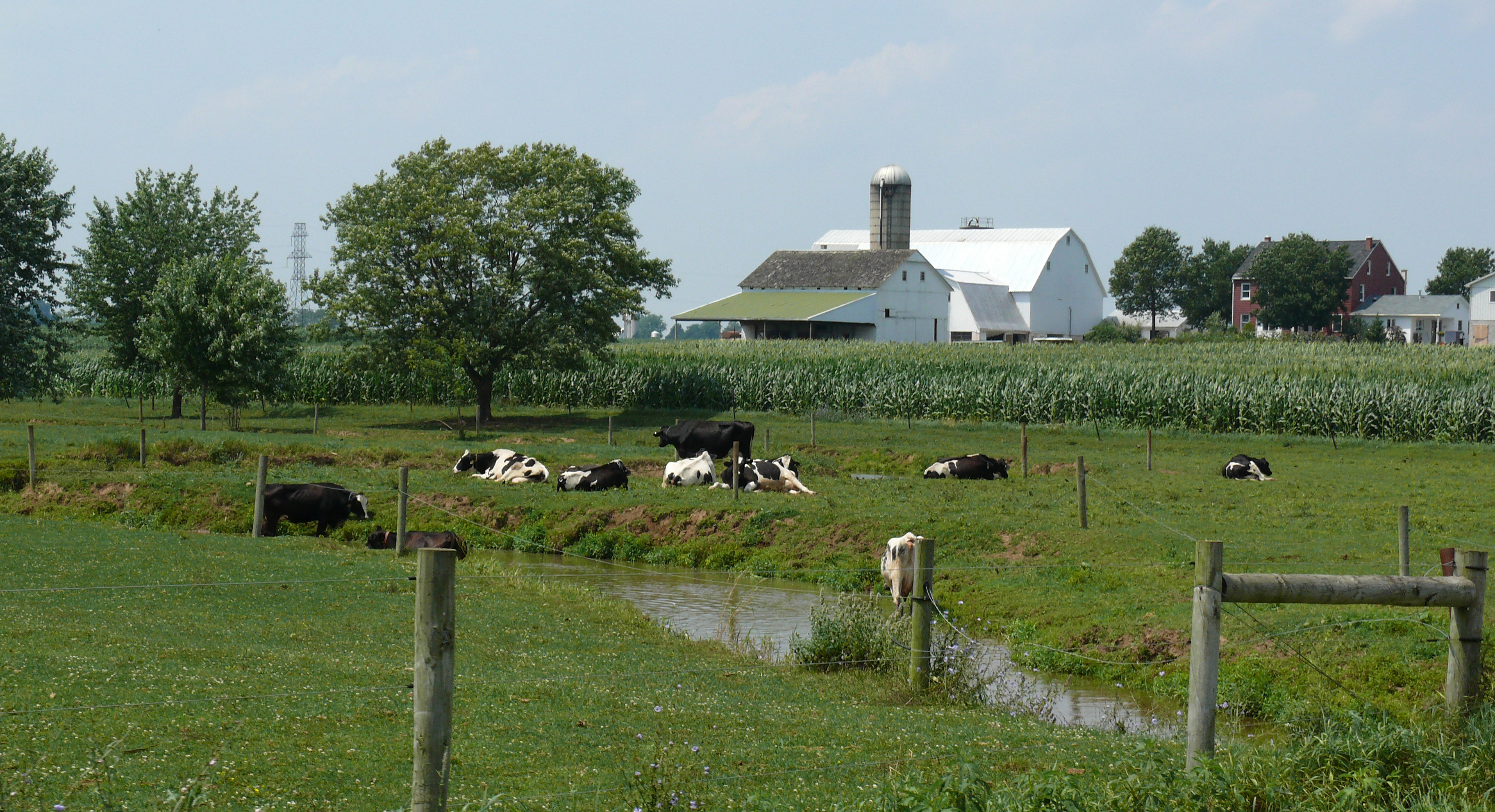 Amish dairy farm 5