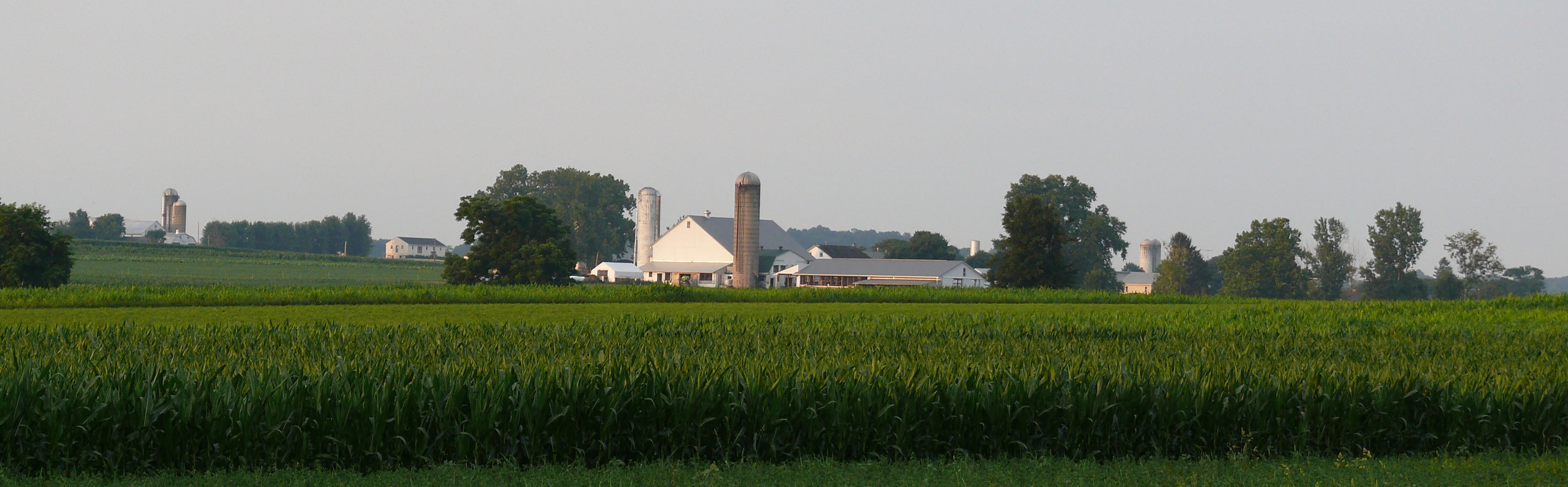 Amish dairy farms 2