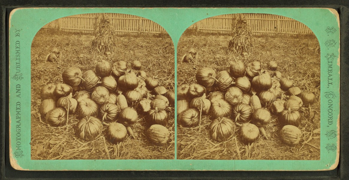 Some pumpkins, from Robert N. Dennis collection of stereoscopic views
