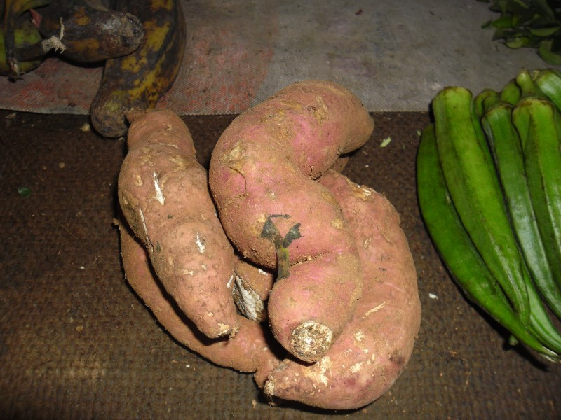 Sweet potatoes 3