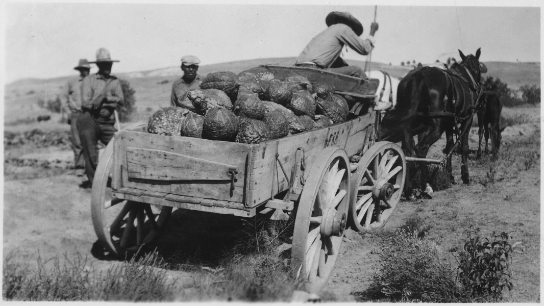 Wagon loaded with squash - NARA - 285663