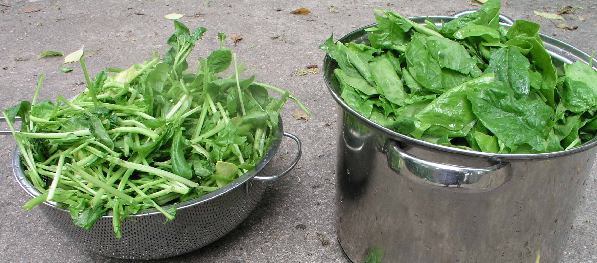 Spinach leaves and stems