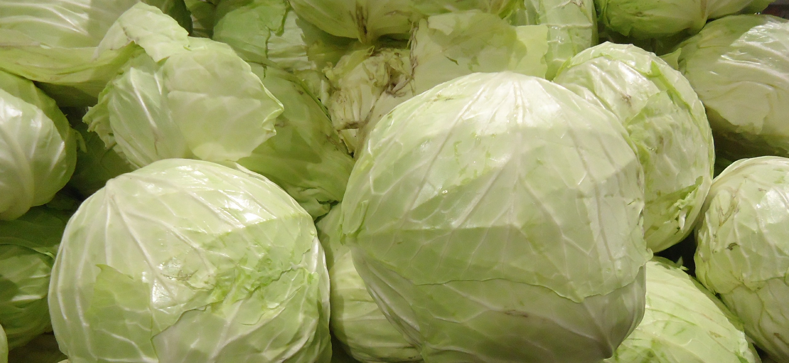 White cabbages at Asian supermarket in New Jersey