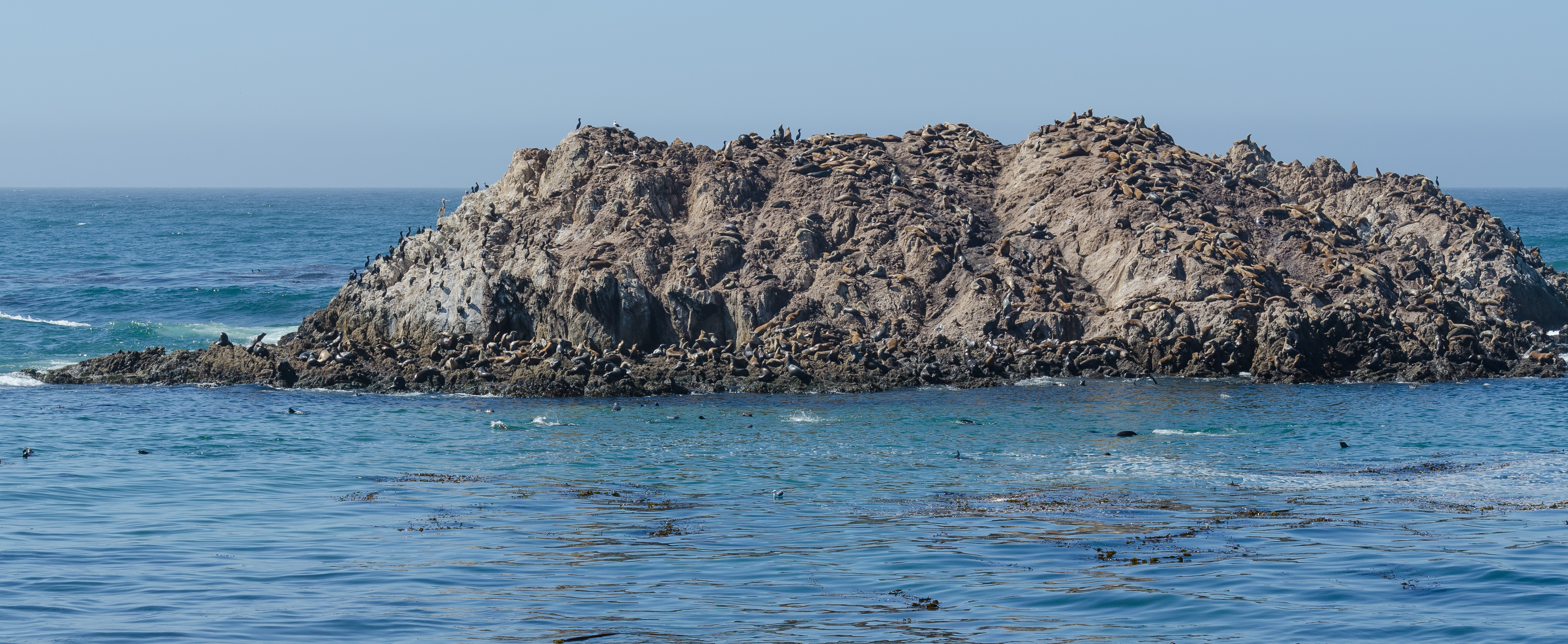 17-Mile Drive Bird Rock 01 2013