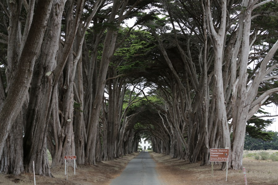 Avenue at Point Reyes (TK1)