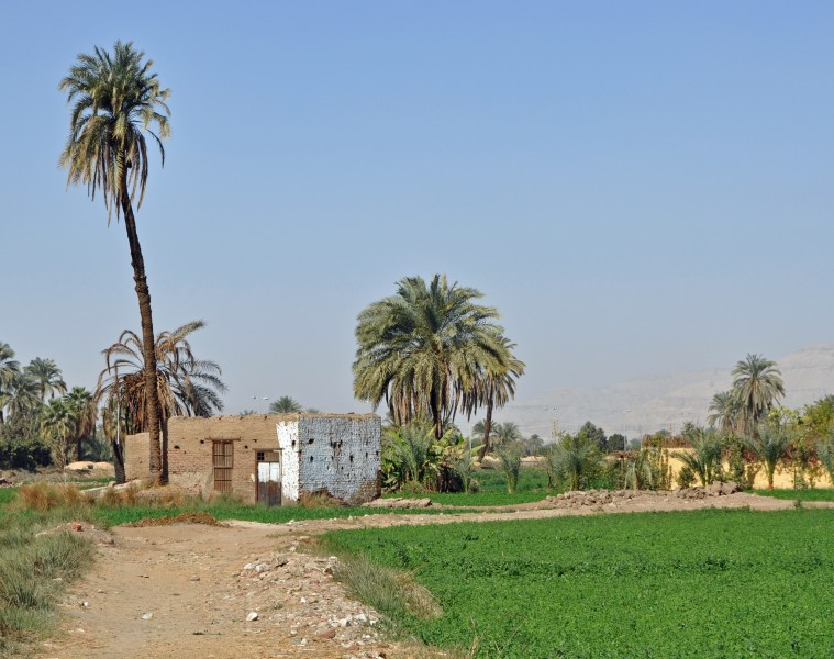 Egyptian Countryside R04