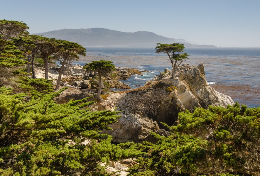 Lone Cypress 17-Mile Drive 2013