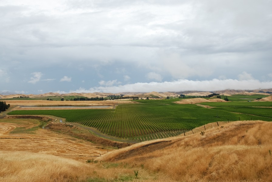 Marlborough Vineyards as seen from New Zealand State Highway 1 100121 1