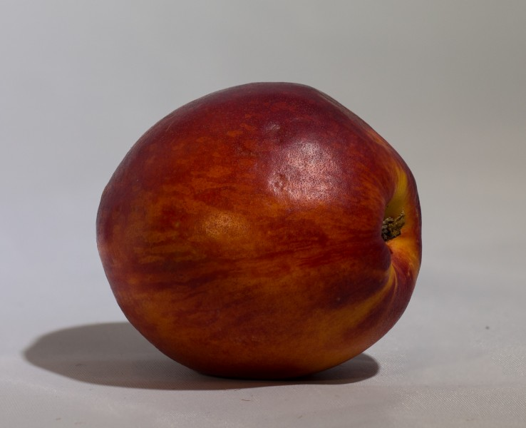 Nectarine on white