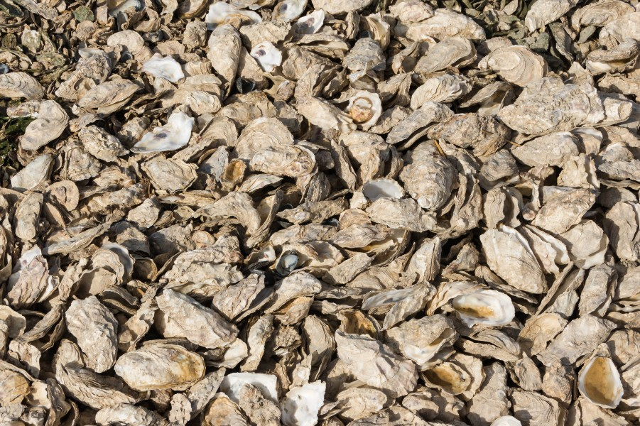 Oyster shells, texture, Esnandes, Charente-Maritime, august 2015