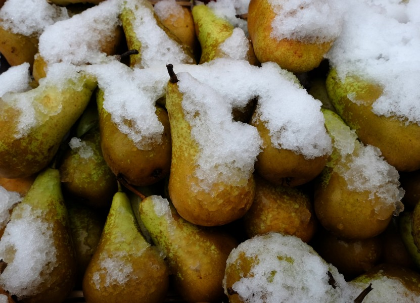 Pears covered in snow at Marché de Boitsfort (Belgium)