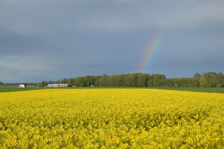 Rainbow in Podlasie