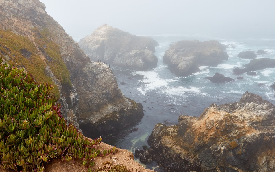 Rocks at Bodega Head on a foggy morning