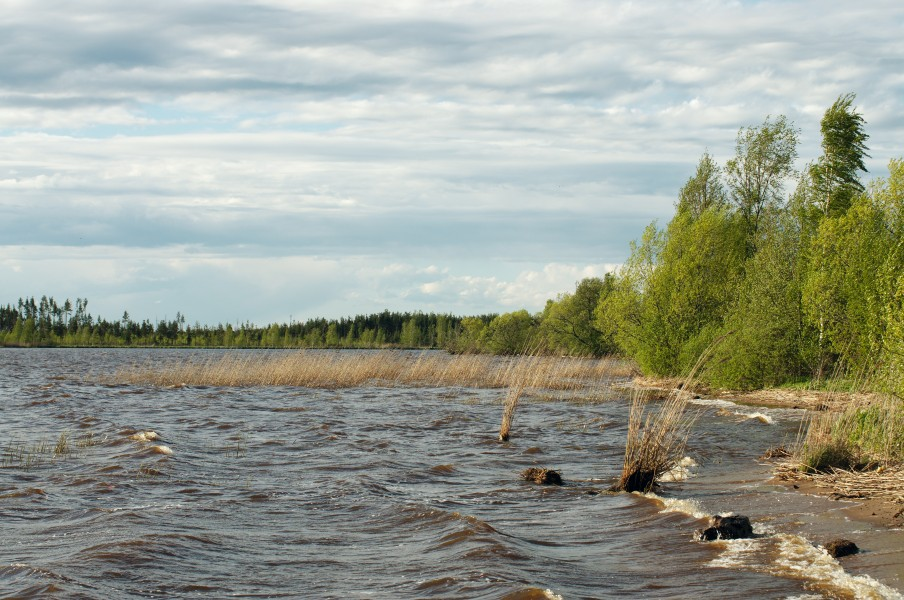 Sestroretsk Marsh - Shore