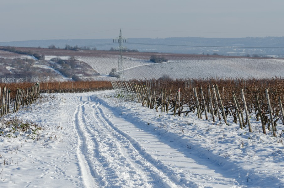 Snow over the Vineyards of Hallgarten and Hattenheim 121208 1
