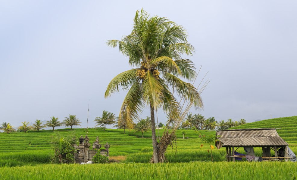 Tabanan-Regency Indonesia Rice-paddies-02