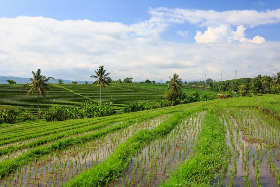Tabanan-Regency Indonesia Rice-paddies-05