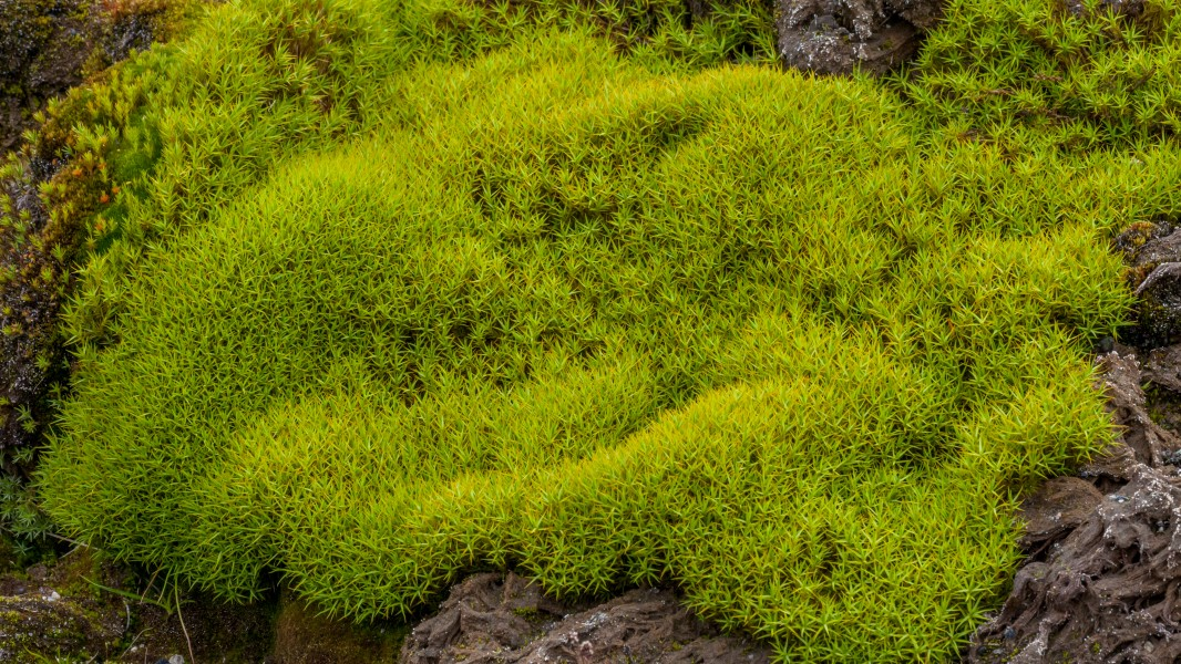 Tundra of Svalbard, densely growing moss