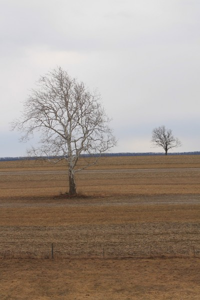 Two trees in a field in April