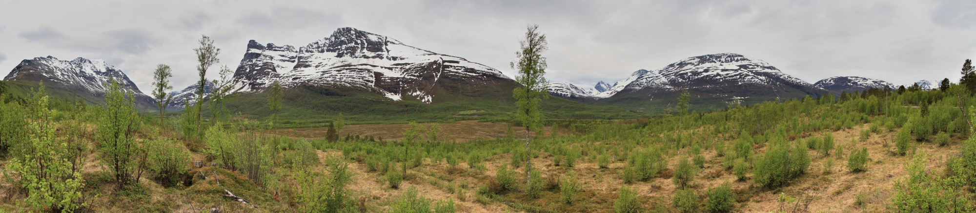 View at northern part of Signaldalen, 2011 06